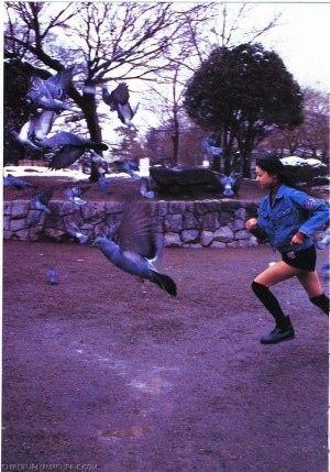 鳩を追いかける
