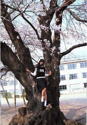 桜の木に登る栗山千明