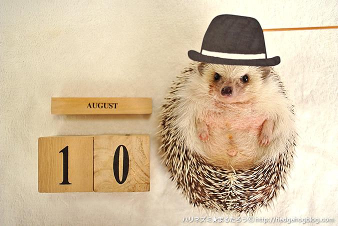 期間は8月31日~9月9日の10日間のみ!